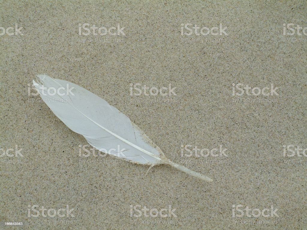 Beach Feather royalty-free stock photo