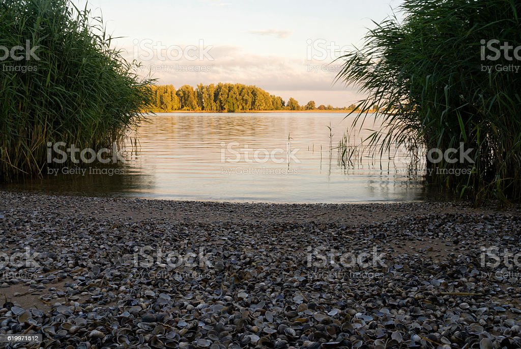 Beach filled with shells stock photo