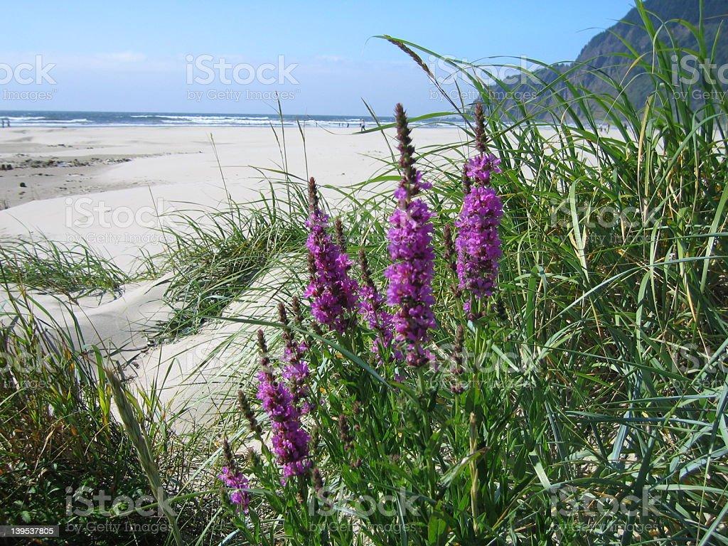 Beach flowers royalty-free stock photo