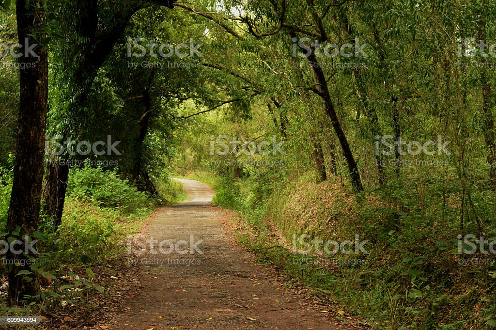 Beach Forest-Stock Image stock photo