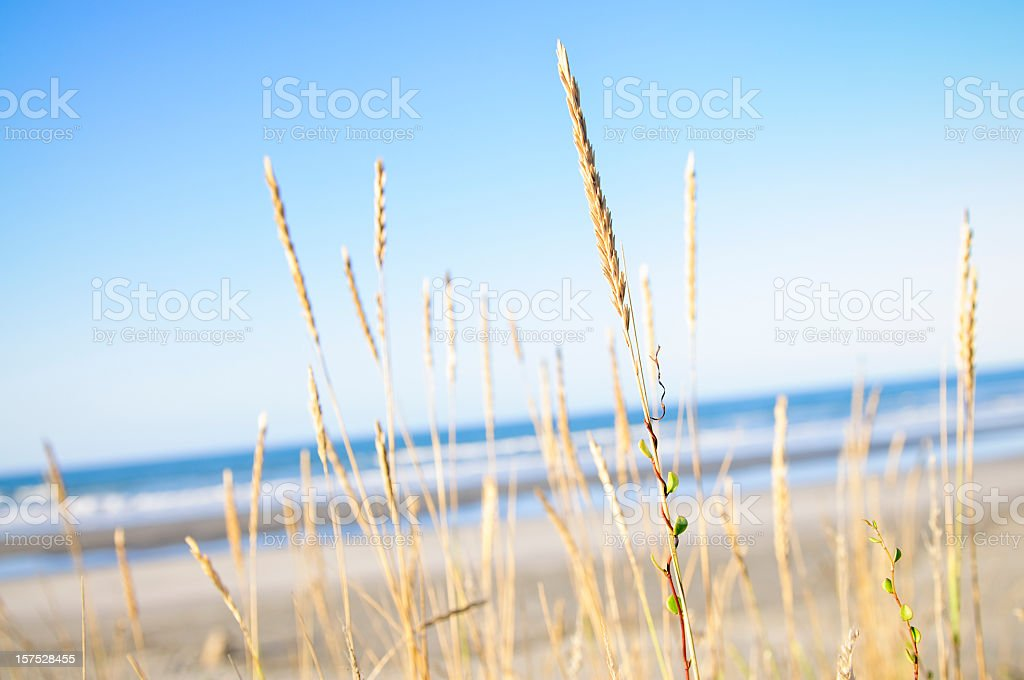 Beach Fresh stock photo