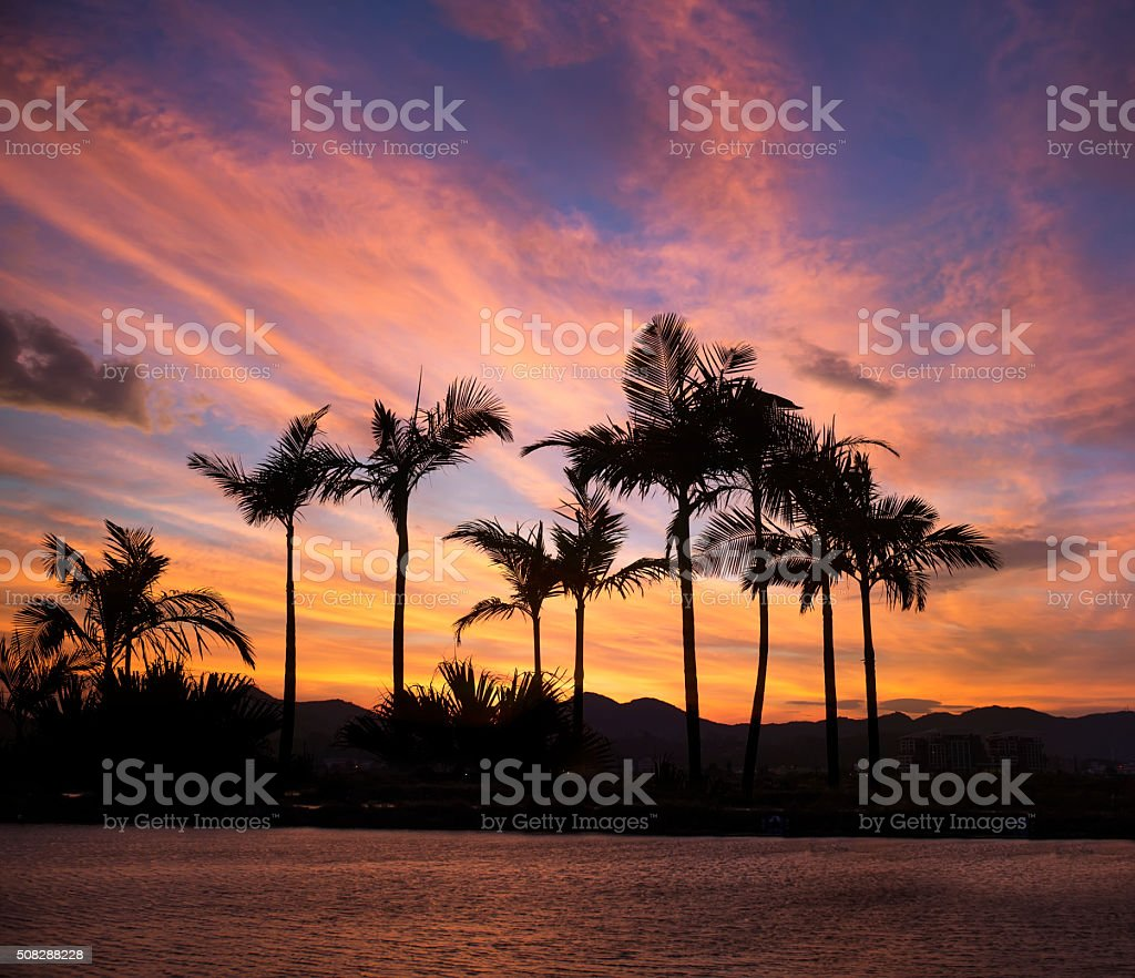 beach fringed with palm trees stock photo