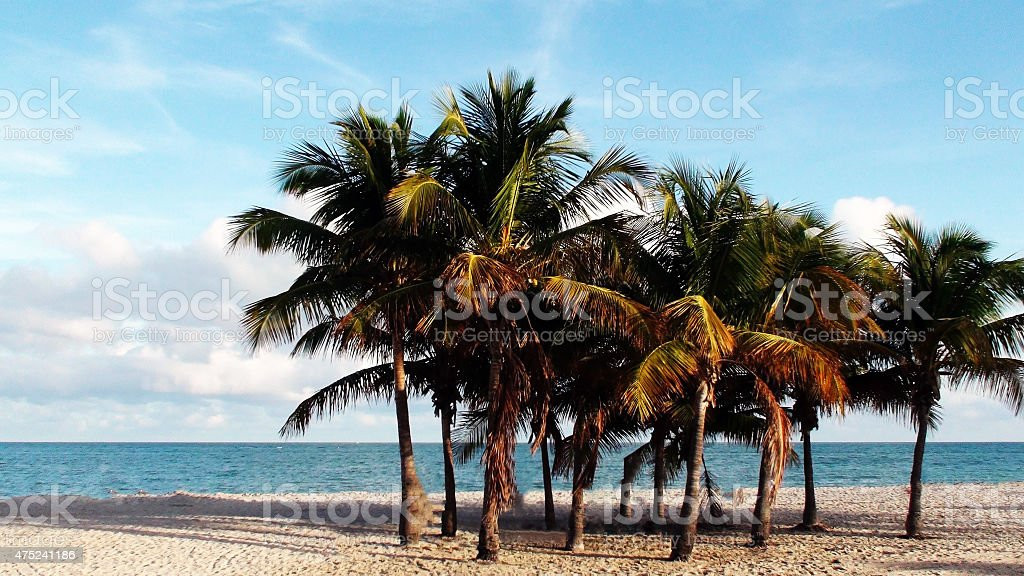 Beach Full Of Coconut Trees In Key Biscayne Miami Florida stock photo