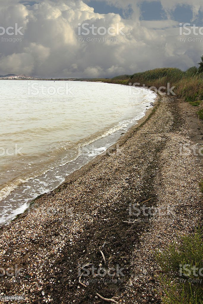 Beach full of shells and clouds in the sky stock photo