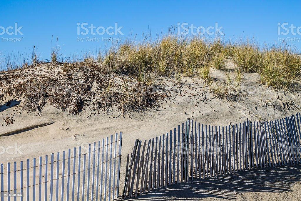 Beach Grass on Dunes with Picket Fence at Sandbridge stock photo