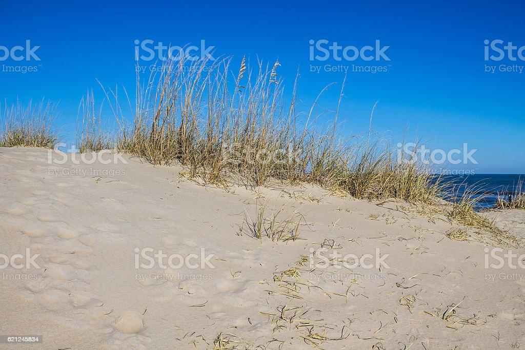 Beach Grass on Sand Dune at Sandbridge Beach in Virginia stock photo