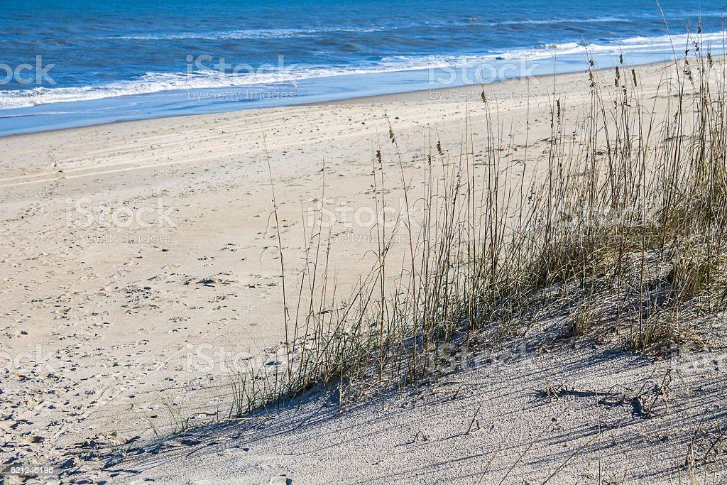 Beach Grass on Sandbridge Beach stock photo