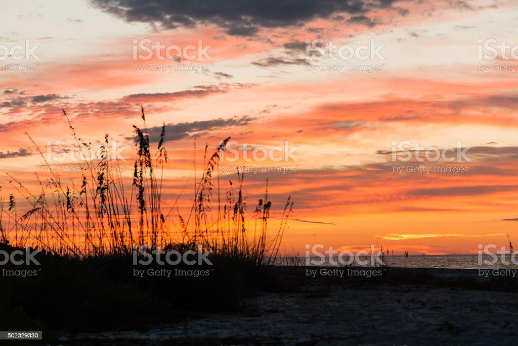 Beach Grass on Sanibel Island at Sunrise stock photo