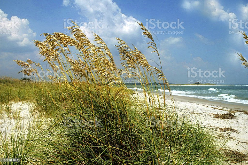 beach grass royalty-free stock photo