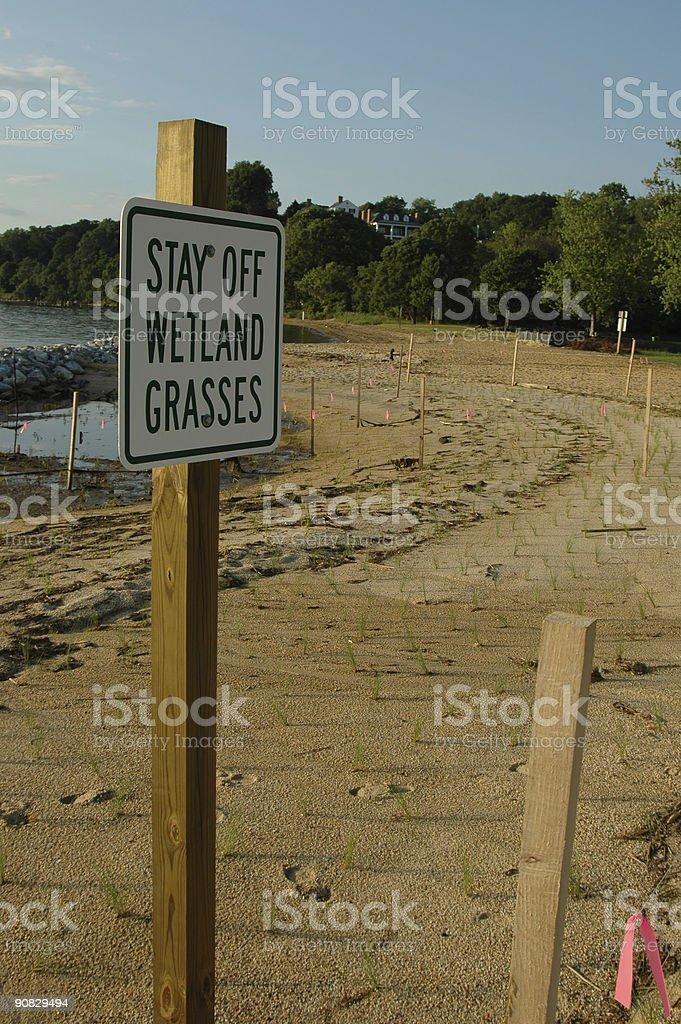 Beach grass revival stock photo