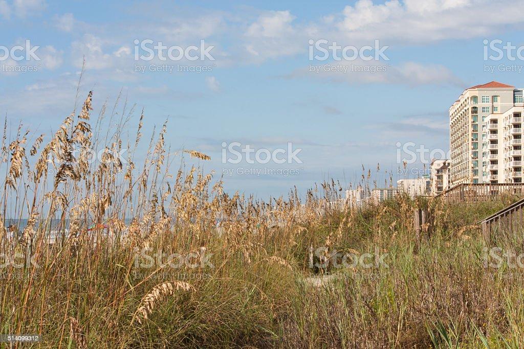 Beach grasses Myrtle beach horizontal stock photo