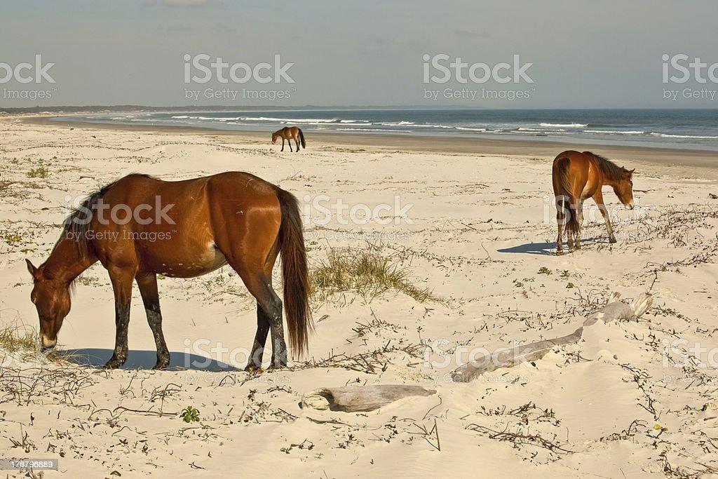 Beach Grazers royalty-free stock photo
