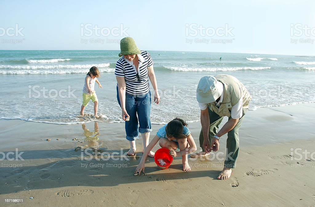 Beach harvest, grandads and grand daugthers royalty-free stock photo