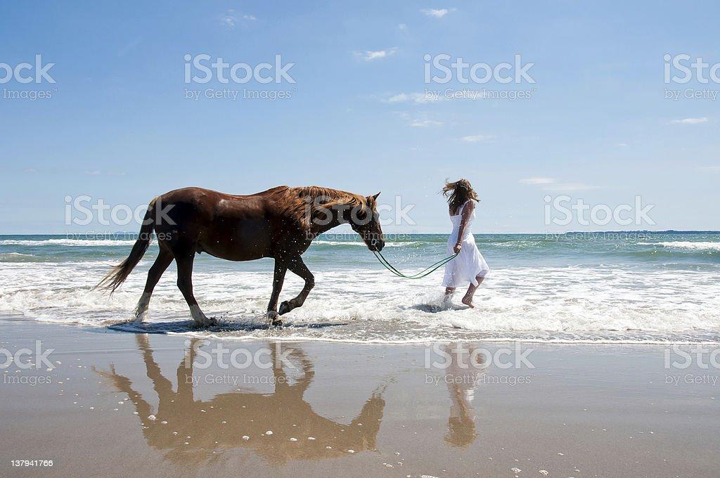 Beach Horse royalty-free stock photo