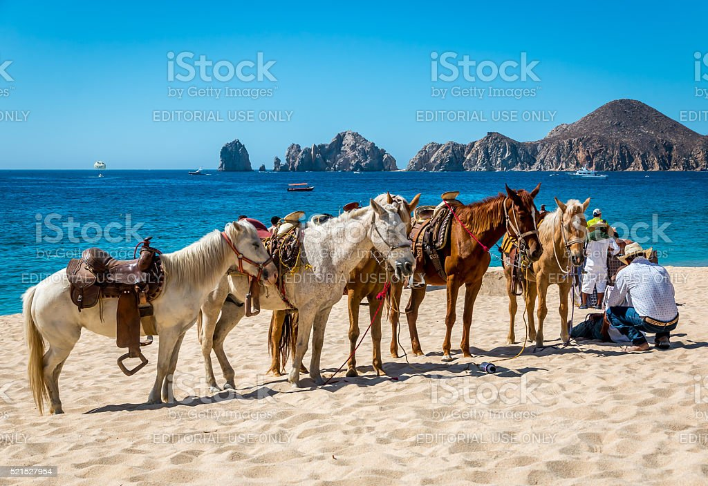 Beach horse rides stock photo