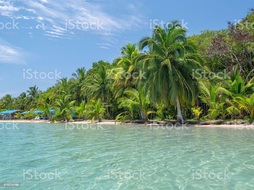 Beach in bocas del toro royalty-free stock photo