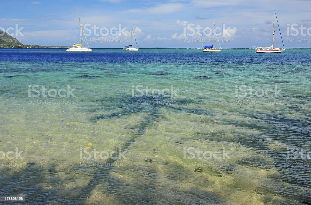 Beach in Moorea, Tahiti royalty-free stock photo