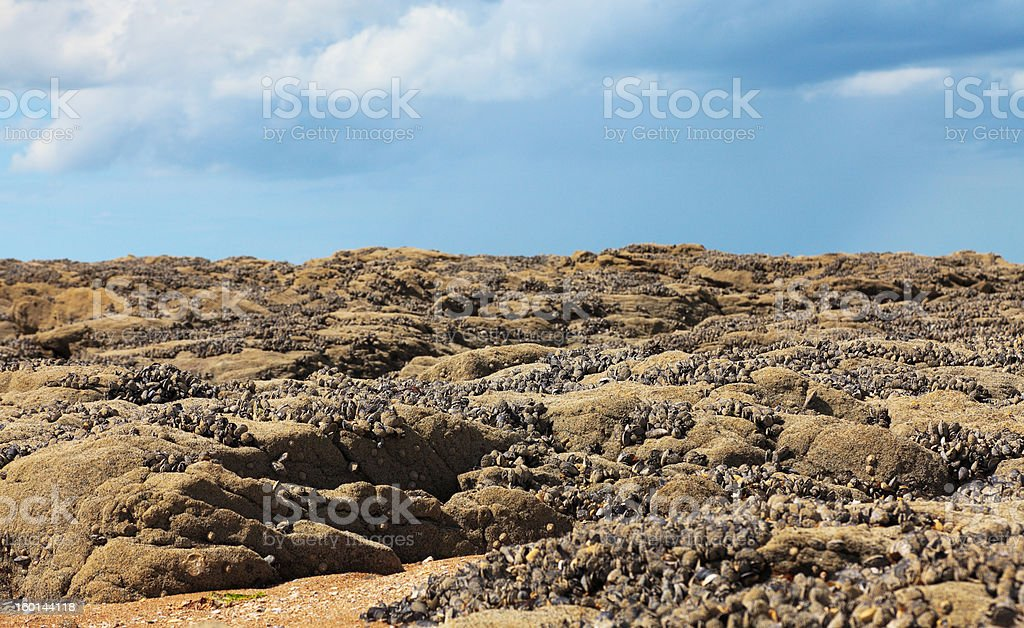 Landscape in Normandy stock photo