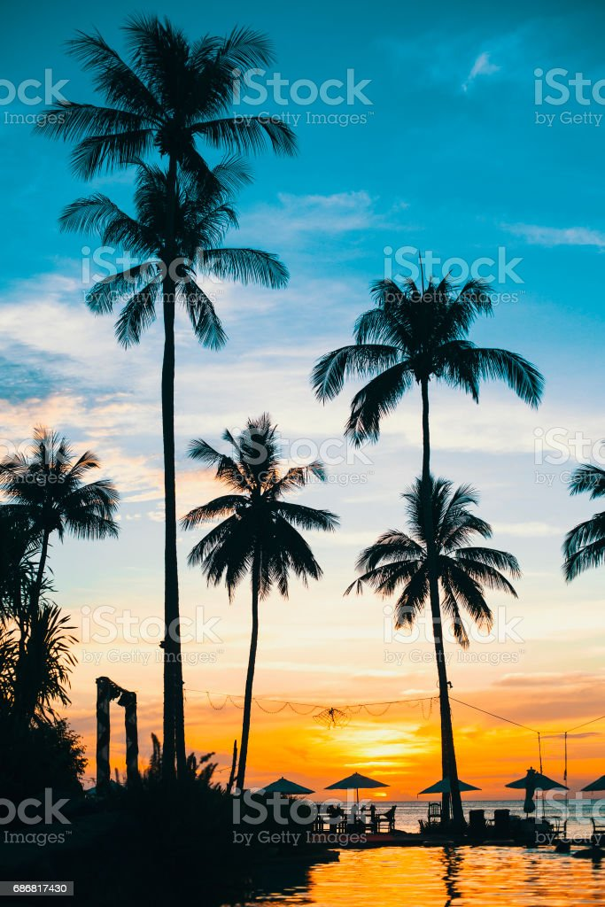 Beach in the tropics. Silhouette of palm trees at sunset. stock photo