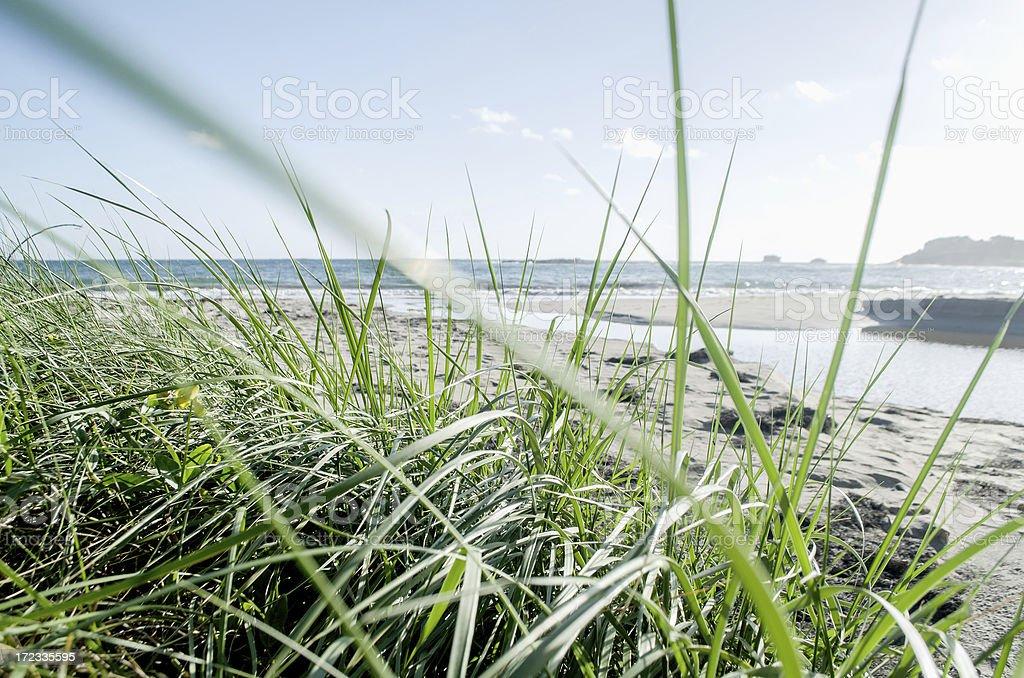 beach landscape through blades of grass stock photo