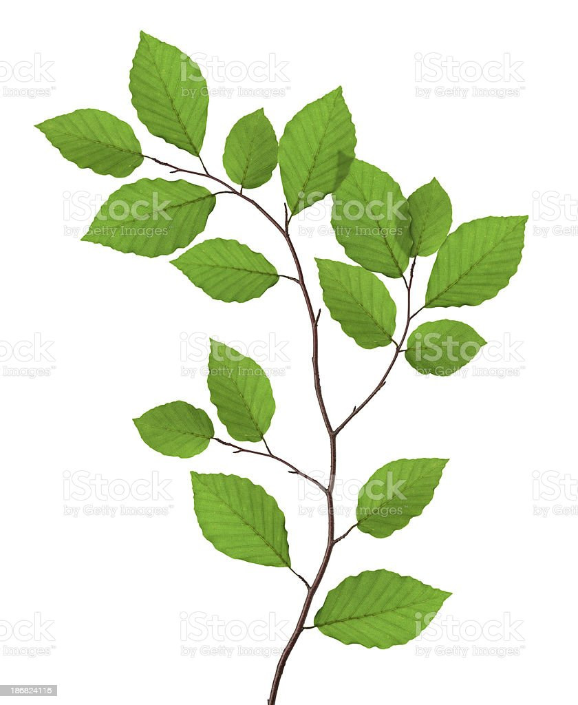 Beach Leaves royalty-free stock photo