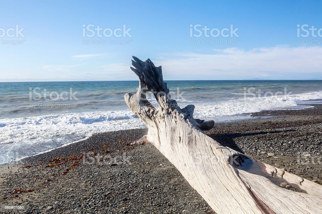 Beach littered with old driftwood - seaside landscape stock photo