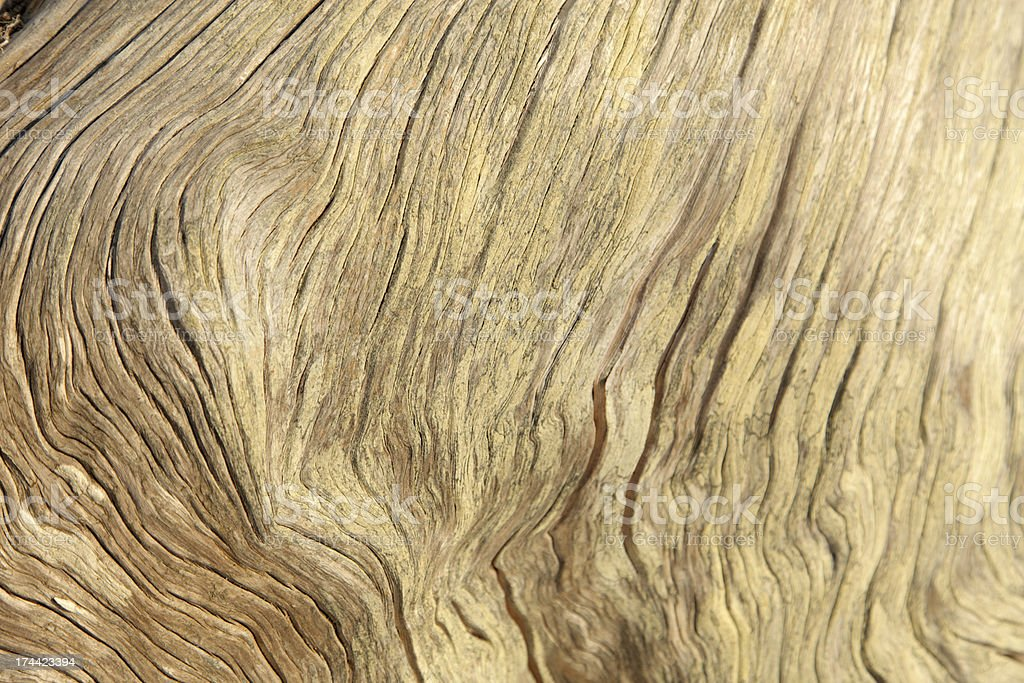Beach log wood grains royalty-free stock photo