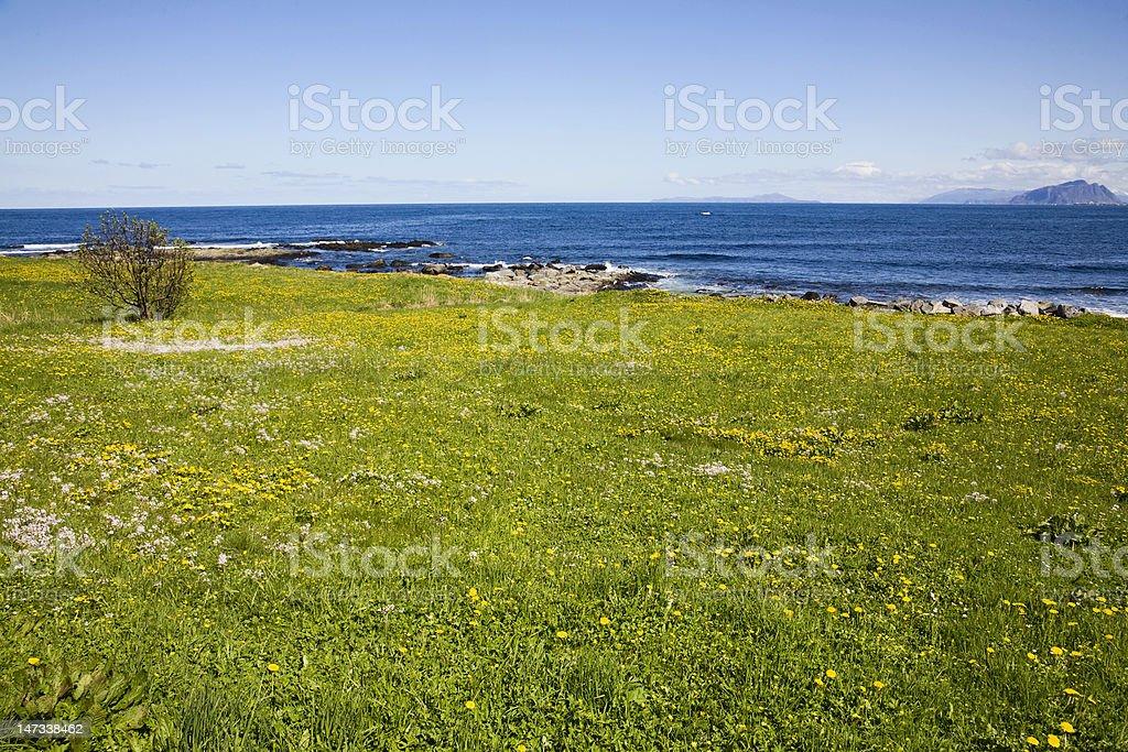 Beach meadow royalty-free stock photo