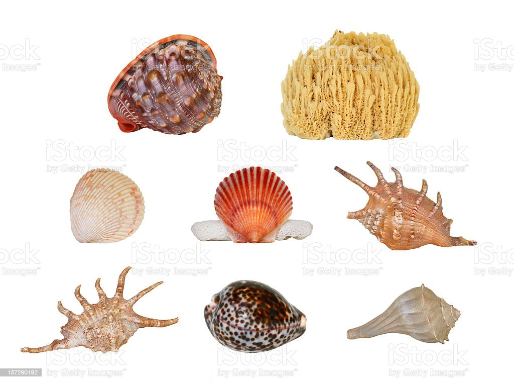 Beach Objects 01 stock photo