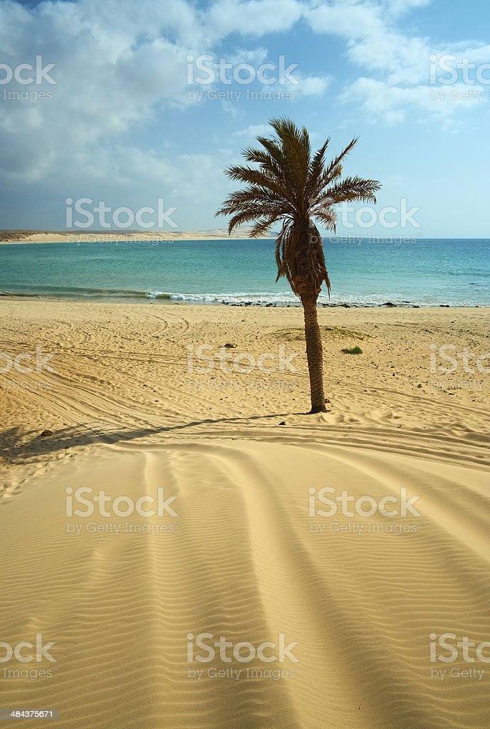 Beach Of Boa Vista, Cape Verde stock photo