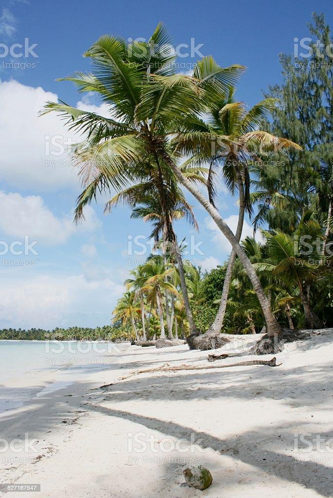 해변에서 도미니카 공화국 푼타 카나행 royalty-free 스톡 사진