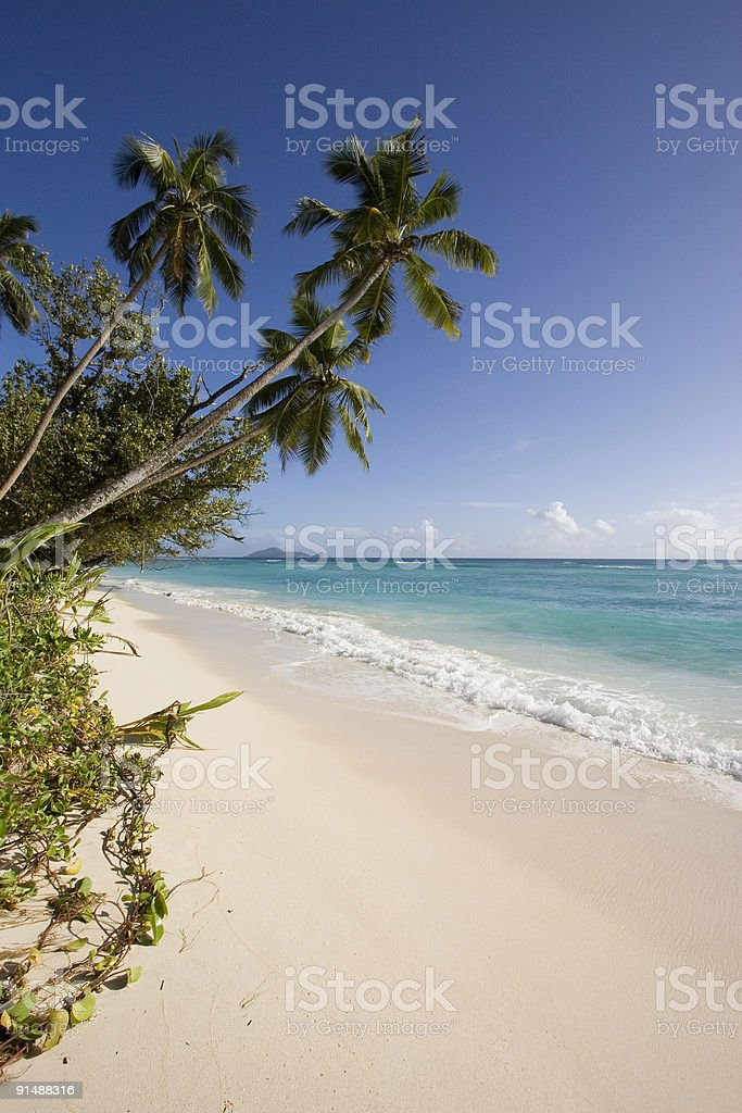 Beach of the Indian ocean stock photo