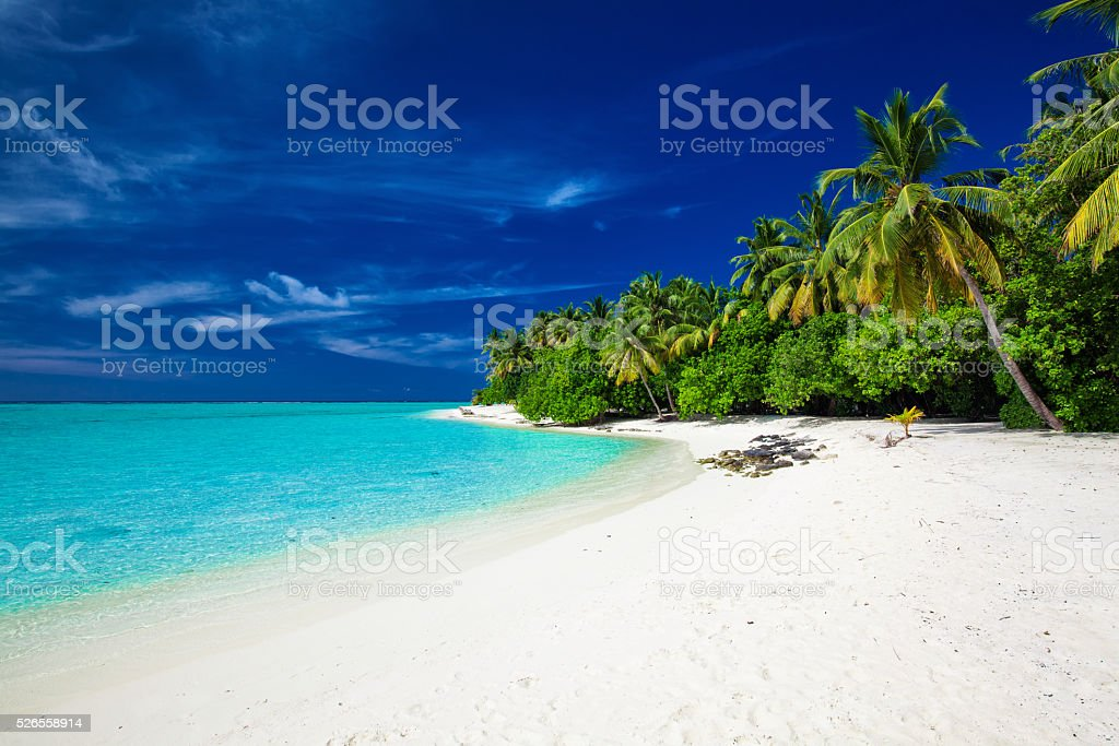Beach on a tropical island with palm trees stock photo
