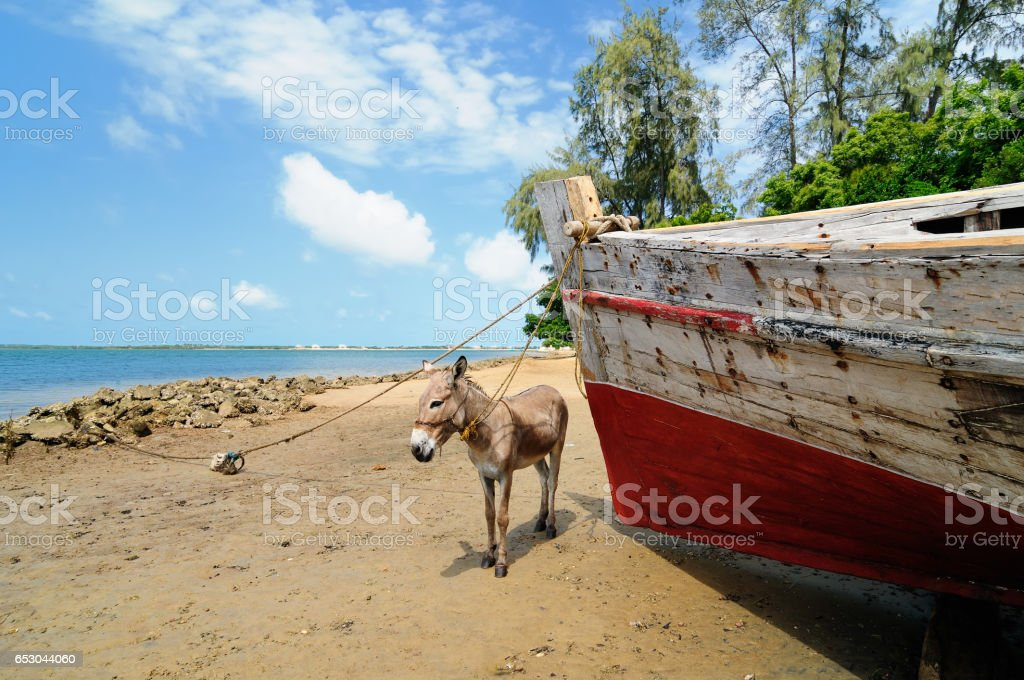 Beach on the Lamu archipelago stock photo