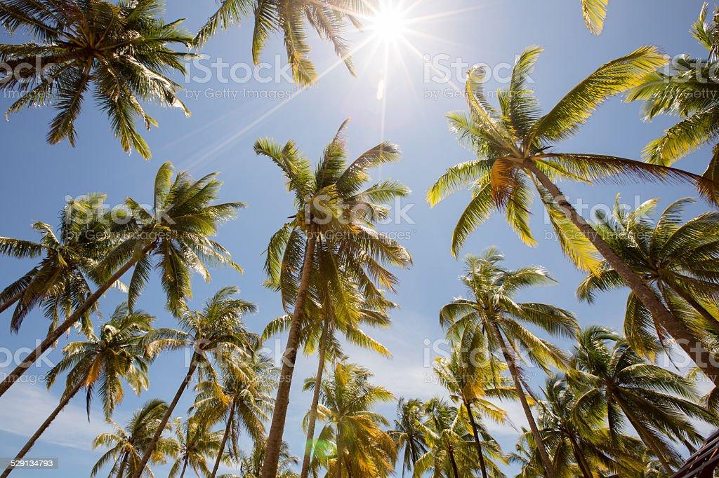 Beach Palmen im tropischen Sonnenschein Lizenzfreies stock-foto