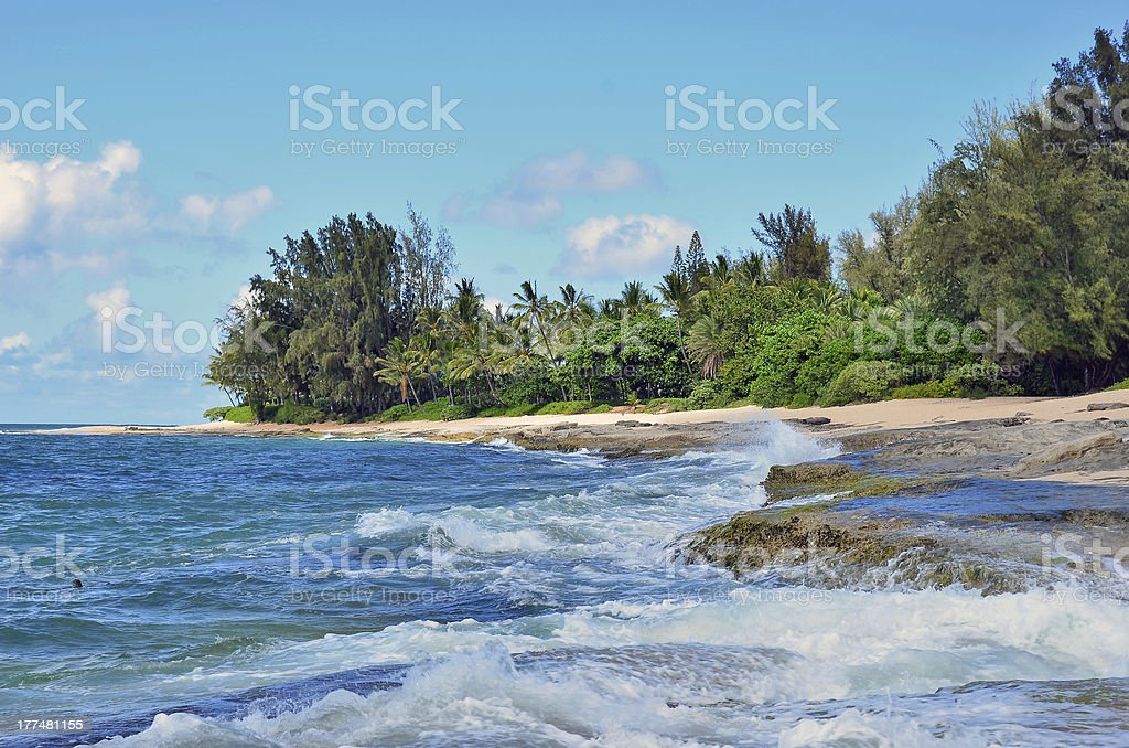 Palmiers sur la plage et la mer photo libre de droits