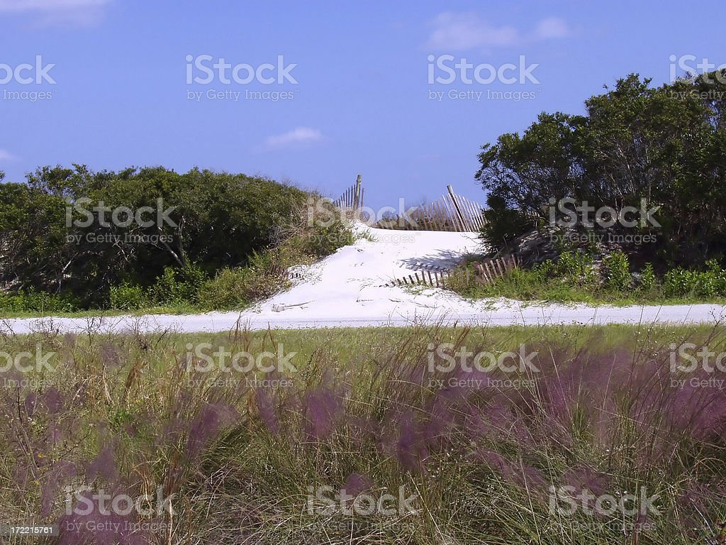 beach path stock photo