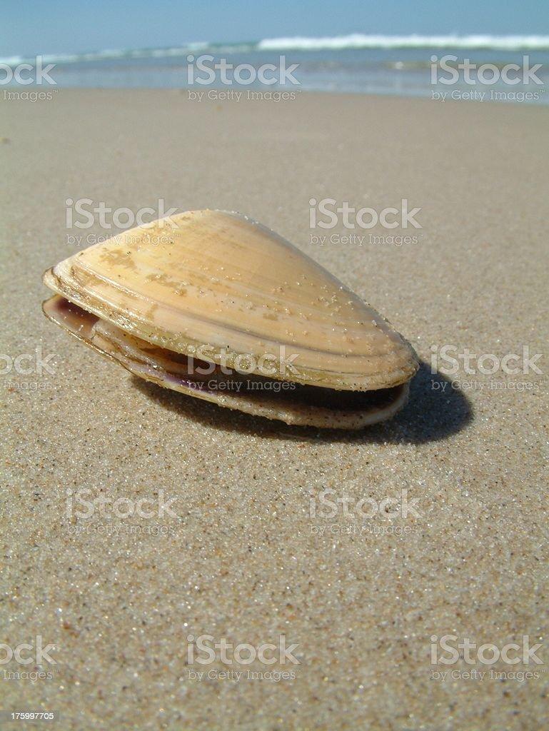 Beach Pippy stock photo