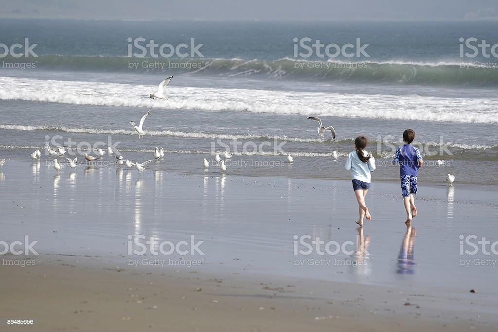 Beach Pursuit royalty-free stock photo