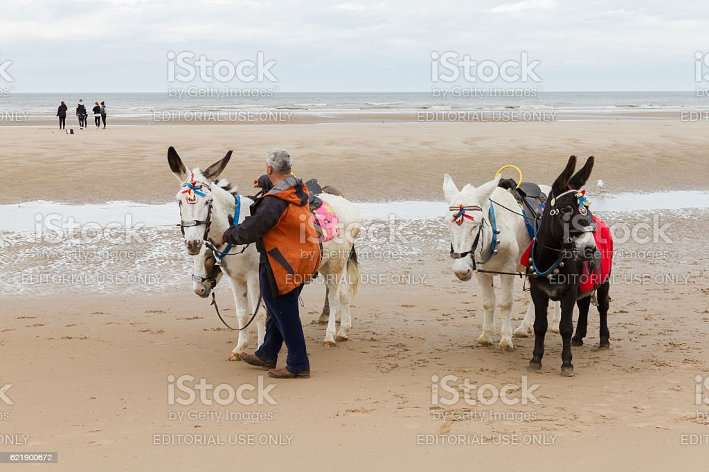 Beach ride donkeys at the beach on a cloudy day stock photo