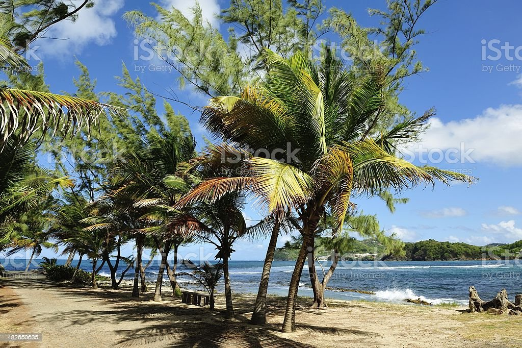 Beach Scene at Rodney Bay, Saint Lucia stock photo