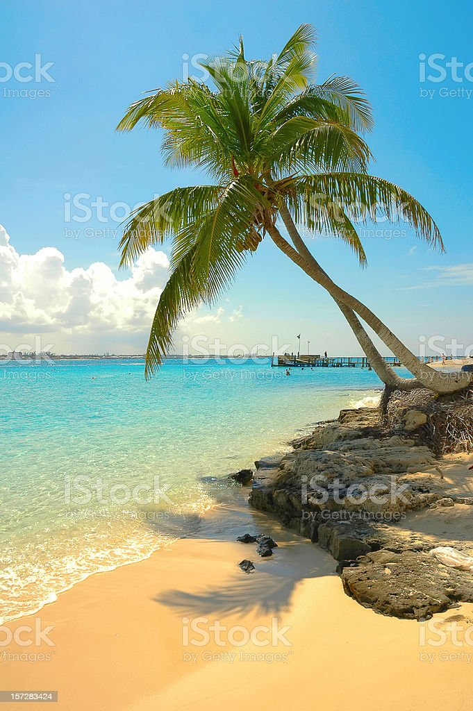 beach scene with palms royalty-free stock photo