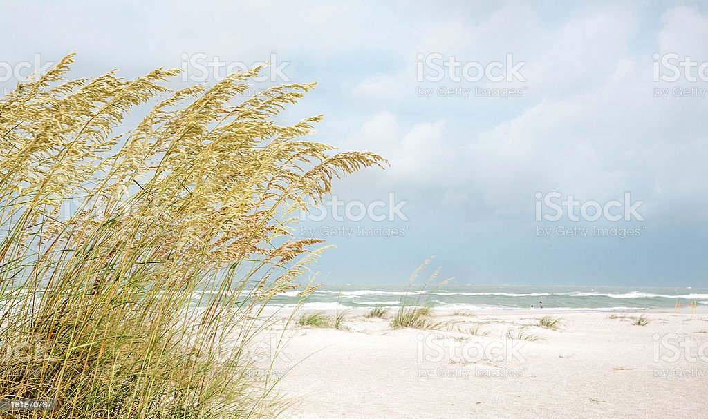 Beach Scene with Sea Oats stock photo