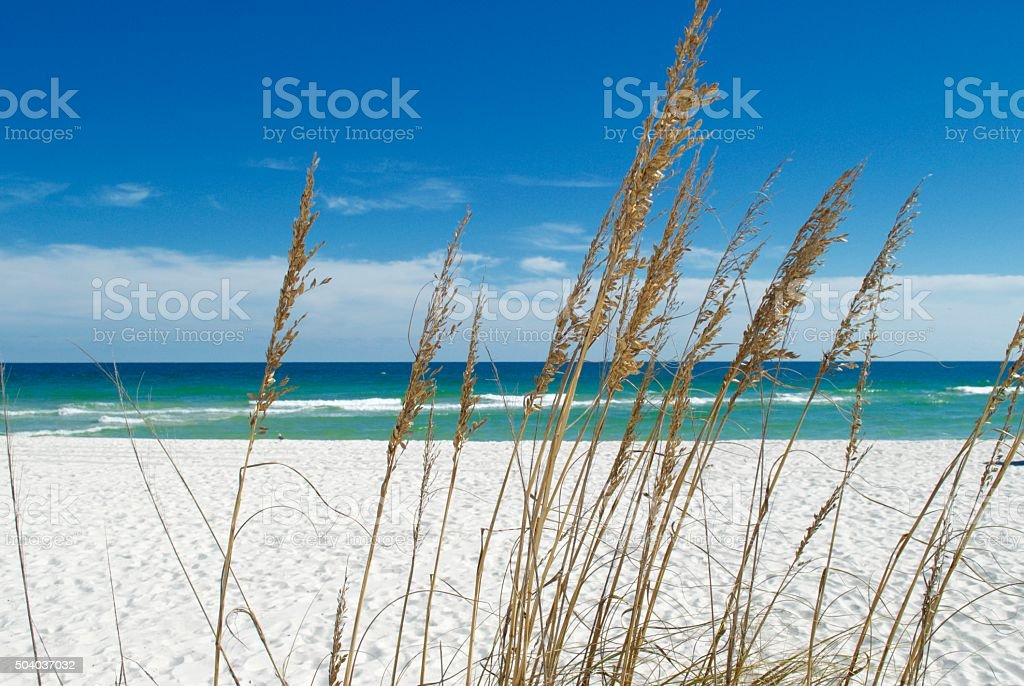 Beach & Sea Oats stock photo
