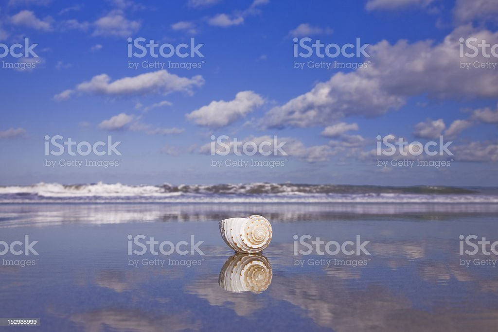 Beach Shell and Reflection royalty-free stock photo