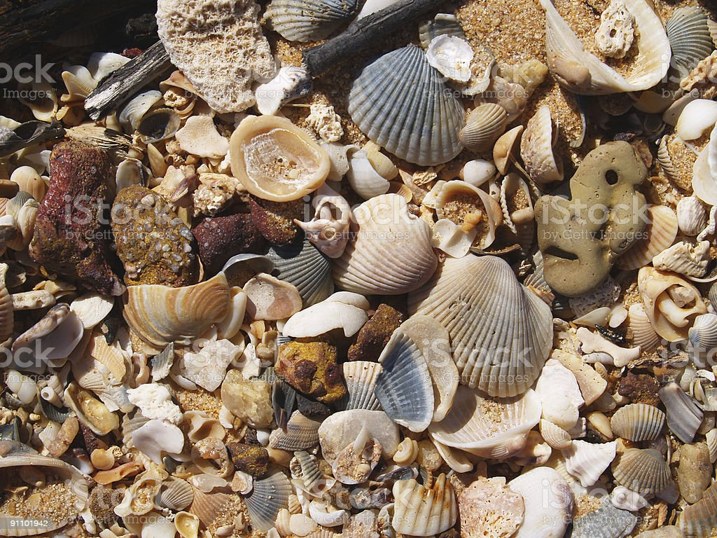 Beach Shell Background stock photo
