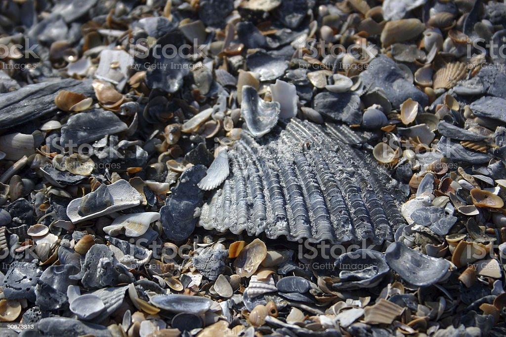 beach shell texture (II) stock photo