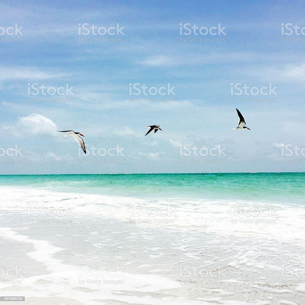 Beach Skimmers stock photo