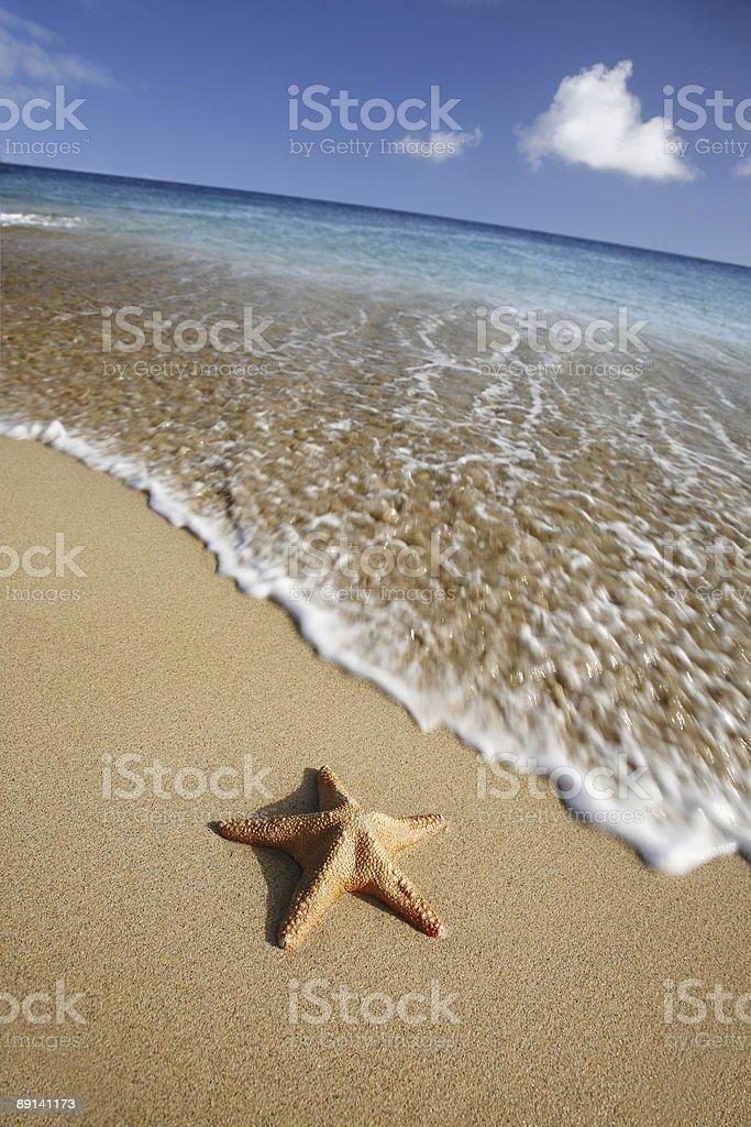 Beach Starfish royalty-free stock photo