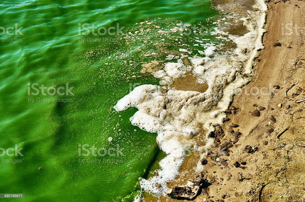 Beach sund pollution blue-green algae bloom stock photo